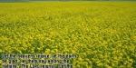 fields_640